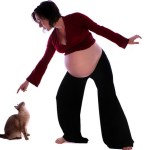 Toxoplasmosis and Pregnancy: What About My Cat?