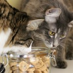 Baking From the Heart – Homemade Cat Treats