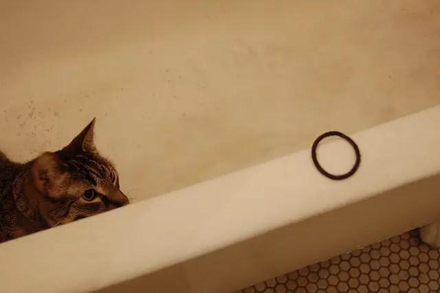 Dating a kleptomaniac cat
