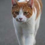 How to Stop Cat Spraying Behaviour
