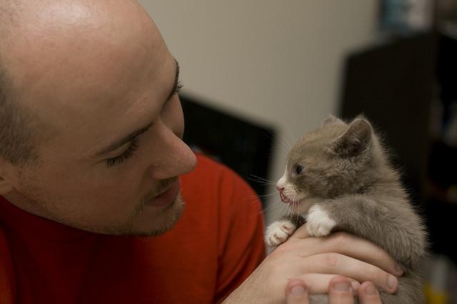 Man holding a grey and white kitten