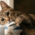 Why Cats Chew Things and How to Stop Destructive Chewing Behaviour