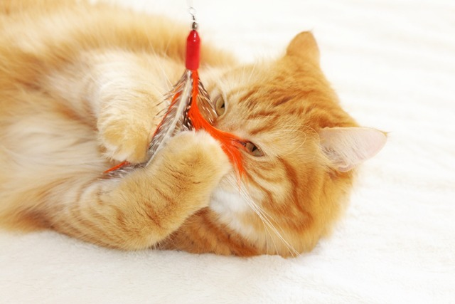 Importance of playtime with your cat