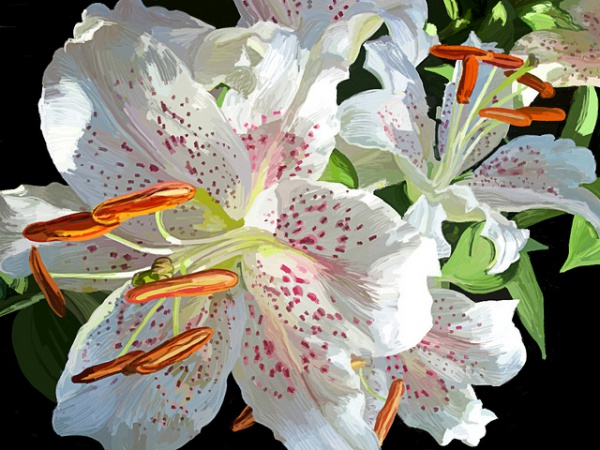 Lillies are extremely toxic for cats | Poisonous Plants for Cats