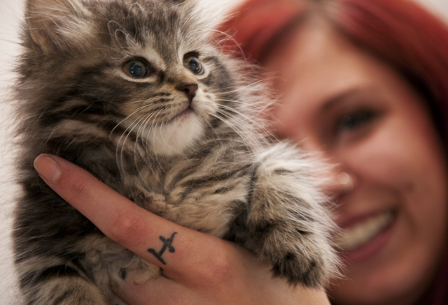 Choosing the Right Cat for You