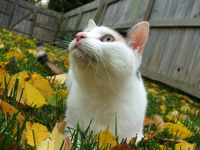 Feline acne is often seen around a cats chin | Common Cat Skin Problems and How to Treat Them