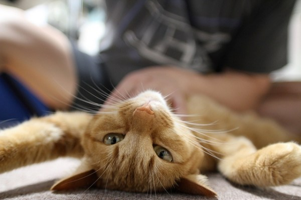 How to Give Your Cat a Massage in 8 Easy Steps