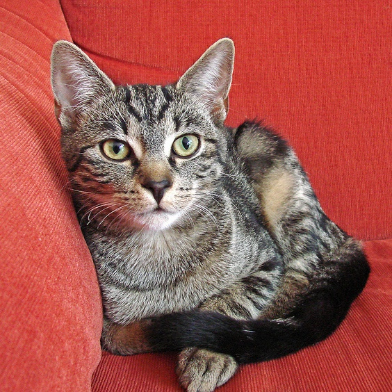 Cat on Red Sofa