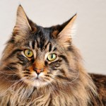 Fact or Fiction: Six Fascinating Facts About Cats