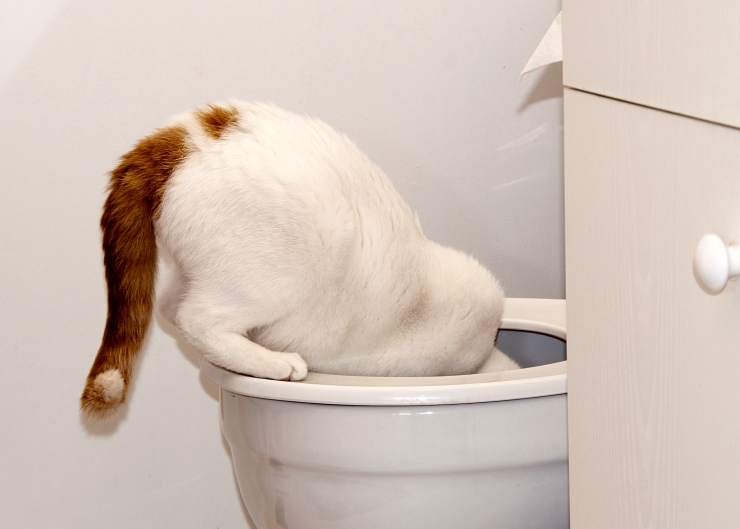 Why would a cat choose to drink toilet water when there's a fresh bowl of water available to him? | Help! Why Does my Cat Drink from the Toilet?
