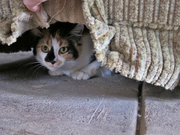 Under furniture is a popular place for cats that like to hide | Why Do Cats Hide? Dangerous Cat Hiding Places