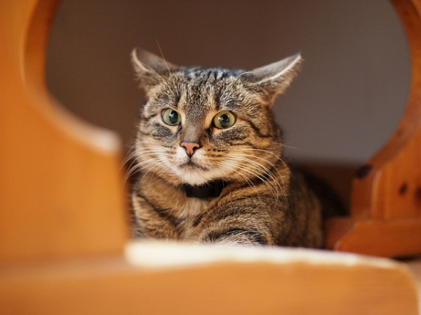 Cats hide for a variety of reasons including fear, comfort and illness | Why Do Cats Hide? Dangerous Cat Hiding Places