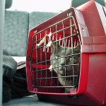 7 Steps to Get Your Cat Used to the Cat Carrier