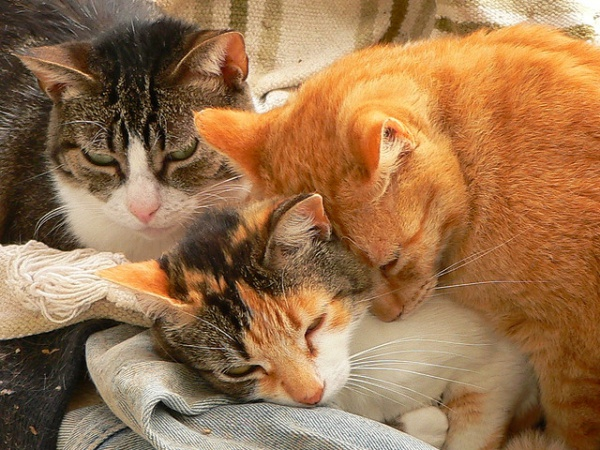 A cat hoarder will have an extremely large number of cats, much more than a typical household, and they're unable to provide decent standards of care, which sadly causes their cats to suffer | Cat Hoarders: the Signs and Consequences