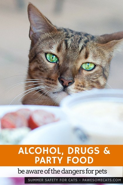 The holiday season a time to eat, drink and be merry, but don't forget about the dangers to our pets at party time | Summer Safety for Cats: Alcohol, Drugs and Party Food