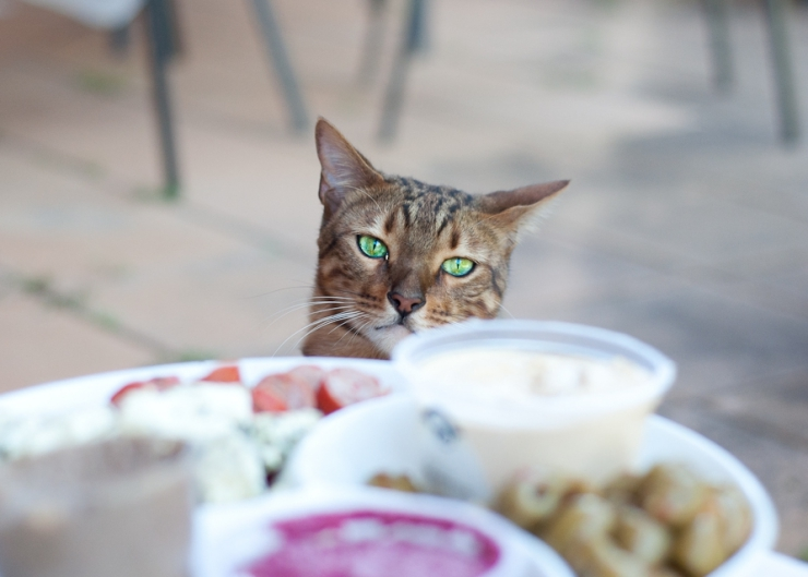 Some human foods are particularly harmful for cats - that's why they have cat food to eat | Summer Safety for Cats: Alcohol, Drugs and Party Food