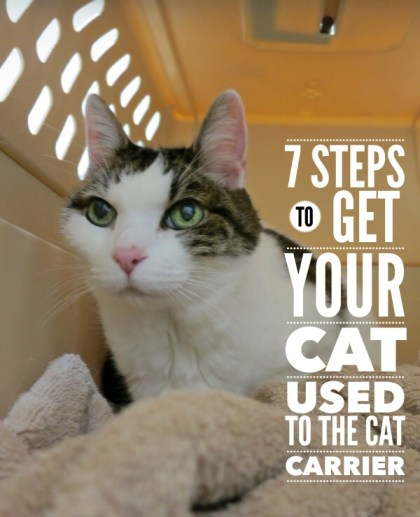 Follow these 7 steps to get your cat used to the cat carrier, and hopefully the hissing, growling and clawed attacks will become a thing of the past | 7 Steps to Get Your Cat Used to the Cat Carrier
