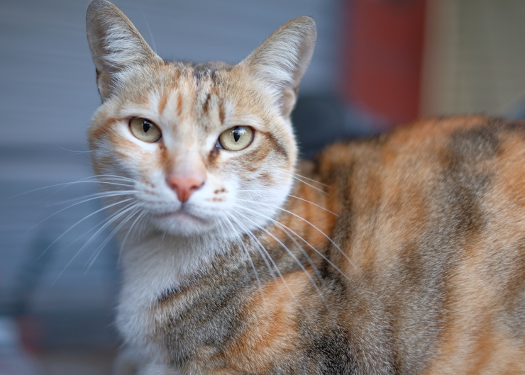 There have been a number of scientific studies conducted that report cat owners visit the doctor less, have a reduced risk of heart disease, and many more amazing things   5 Reasons Why Your Cat is Good for Your Health