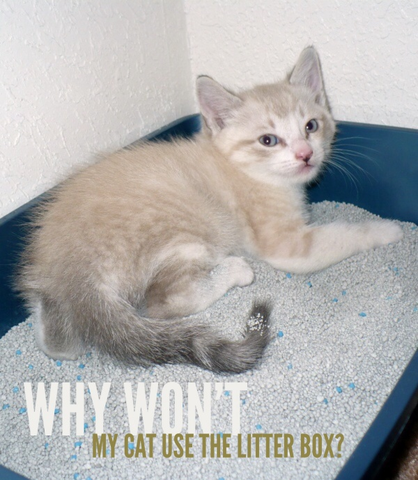 Inappropriate elimination and litter box problems are common in cats, but luckily it's usually easy to pinpoint the cause and deal with it accordingly | Why won't my Cat use the Litter Box?