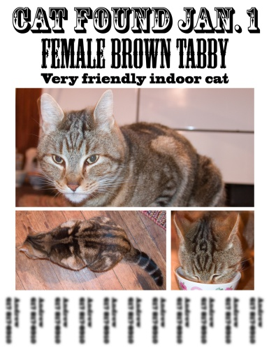 Found a stray cat? Print flyers and posters to go around the area and post on social media   What to do When You Find a Stray Cat