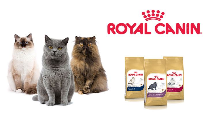 Breed specific nutrition takes into account the physical characteristics of cat breeds such as the shape of their jaw and biting habits, their body size and structure, the length and thickness of their coat, and uses this information to tailor a food that provides the best possible nutrition | Breed Specific Nutrition for Your Cat