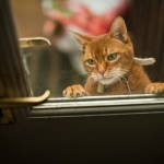 Are You and Your Cats Prepared for a Natural Disaster?
