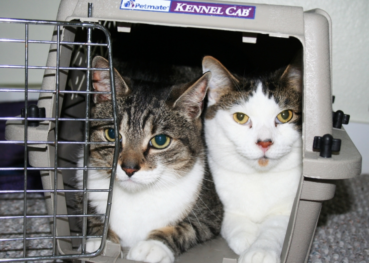 Possessions are replaceable, but pets are priceless! | Are You and Your Cats Prepared for a Natural Disaster?