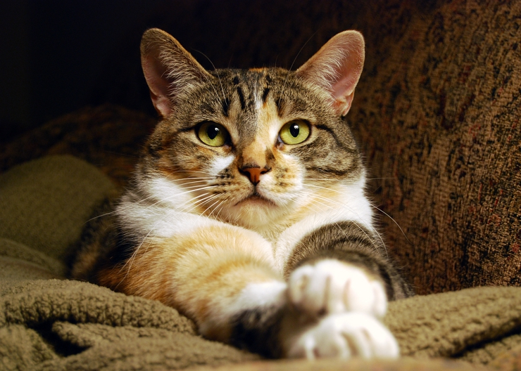 We discuss the common causes of seizures in cats and what to do if your cat has a seizure | Understanding Epilepsy and Seizures in Cats