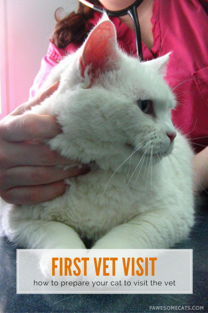 Does your cat cope well with vet visits? We share our tips to help ensure that your cat's trip to the vet is a positive experience not a stressful one | How to Prepare Your Cat for their First Vet Visit