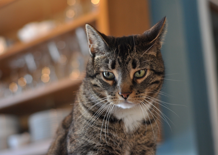 Many health problems in older cats can be treated or controlled, so spotting a problem early is good news for your cat | Common Illnesses Older Cats are More Likely to Experience