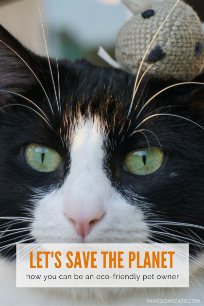 It is possible to provide for your cat's needs in a responsible way that has a minimal impact on the planet | Earth Day: How to be an Eco Friendly Pet Owner