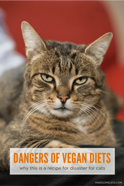 No matter how good your moral intentions, it is important to remember that your cat is an 'obligate carnivore' and they MUST eat meat   The Dangers of Feeding your Cat a Vegan Diet