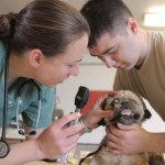 So You Want to Be a Vet? Here's What you Need to Know