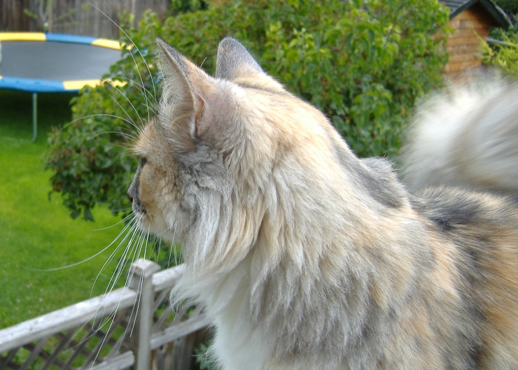 Topic des chats - Page 33 Cat-looking-over-balcony