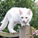 Facts About Cancer in Cats