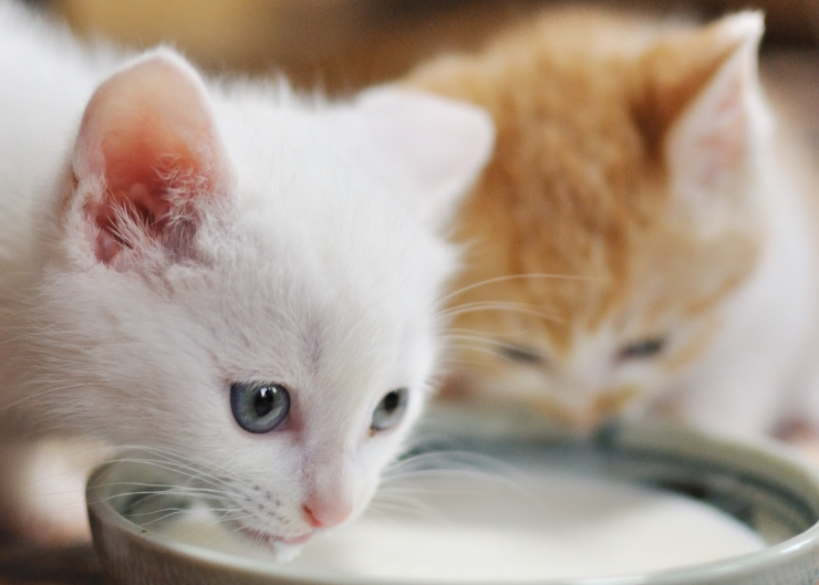 How healthy is your cat's gut? We talk about the role of bacteria in digestion and how to use probiotics for your cat topromote gastro-intestinal health | Role of Probiotics in Your Cat's Diet