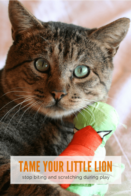 Do you have a cat that plays rough? Discover how to tame your little lion and stop cat bites and scratches during playtime and petting | How to Stop Your Cat Biting and Scratching During Play