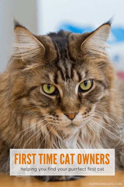Some cats are more of a handful than others. Here's our list of cat breeds for first time cat owners to ensure you don't bite off more than you can chew. | Best Cat Breeds for First Time Cat Owners