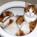 Should I Worry About My Cat's Poop?