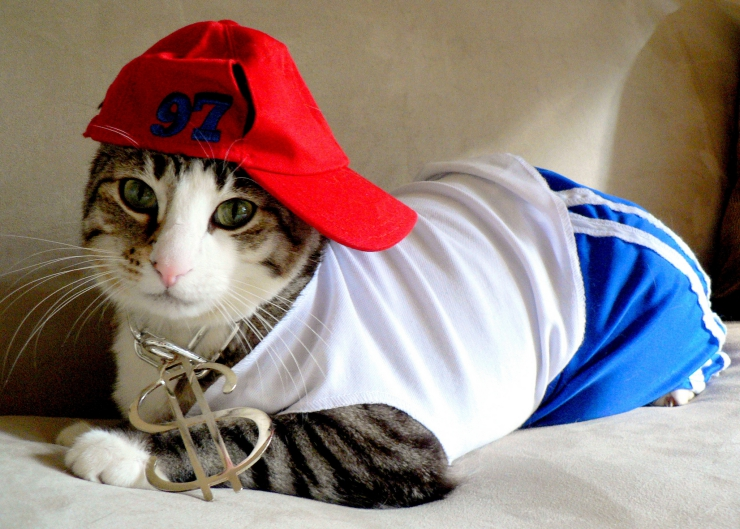 Please use common sense when it comes to dressing your cat in a costume - put your cat's health, safety and comfort first. | Should You Dress Your Cat in a Costume?