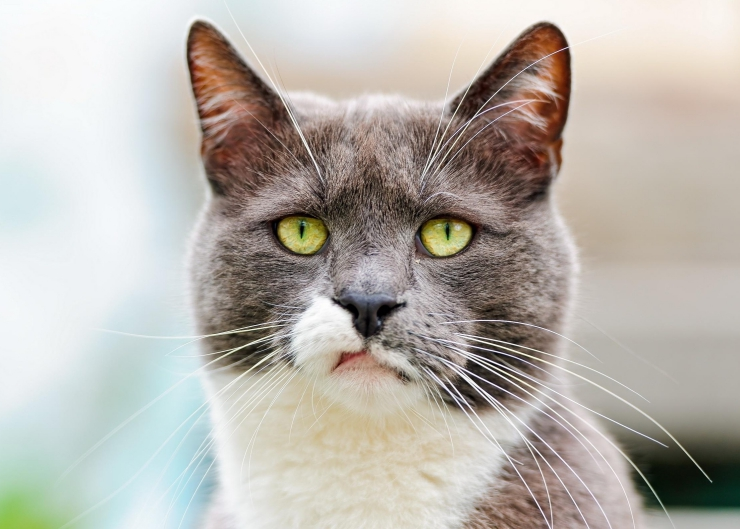 Each year over 50,000 people are infected with rabies worldwide. We discuss the signs of rabies infection in cats, and the importance of vaccination | Rabies Infection in Cats - World Rabies Day