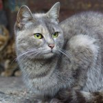Trap-Neuter-Release (TNR) to Control Feral Cat Populations