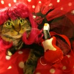 Should You Dress Your Cat in a Costume?