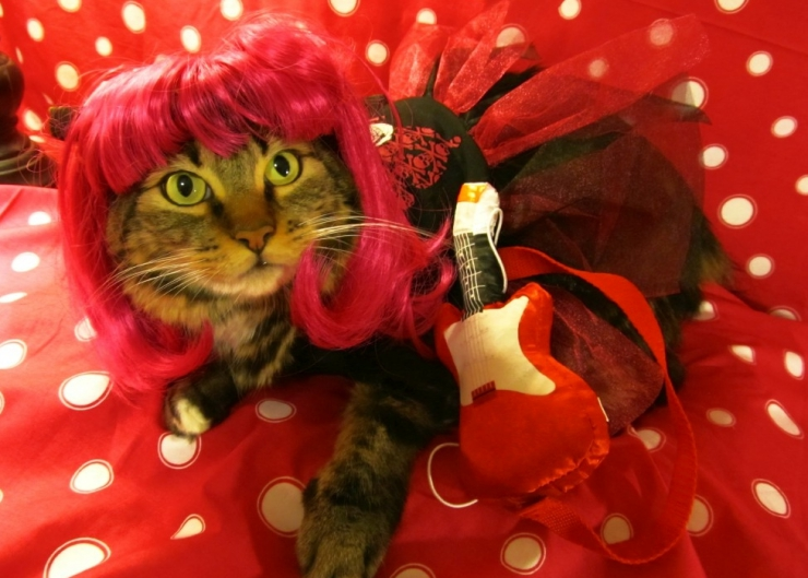 green eyed cat dressed in a red rockstar outfit complete with red wig and tiny guitar