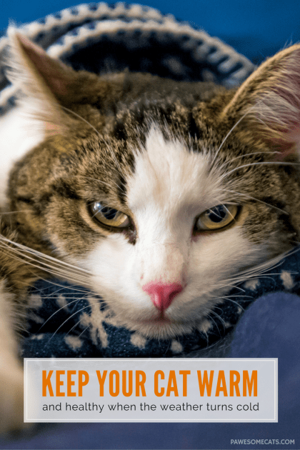 As the outside temperatures plummet, it's important to keep your cat warm and staying well. | Ways to Keep Your Cat Warm This Winter