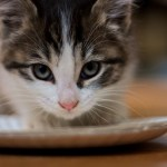 Understanding Food Allergies and Intolerance in Cats