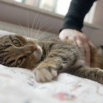 7 Reasons Pets are Good for Your Mental Health