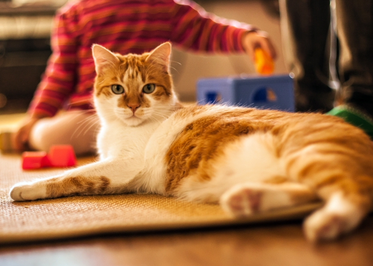 Therapy cats play a vital role within society. Simply stroking a cat, or listening to them purr can help people to relax or to communicate better. | The Role of the Therapy Cat: Helping People People in the Community