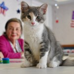 The Role of the Therapy Cat: Helping People in the Community