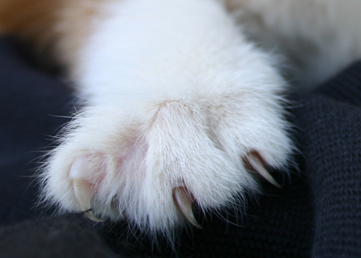 We discuss the causes and symptoms of cat scratch fever, who is most at risk and how to prevent infection if you are scratched by a cat | Understanding Cat Scratch Disease